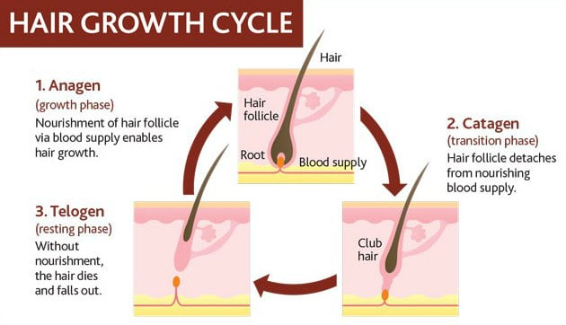 How To Stimulate Hair Follicle Growth Naturally