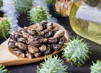 castor oil for beard