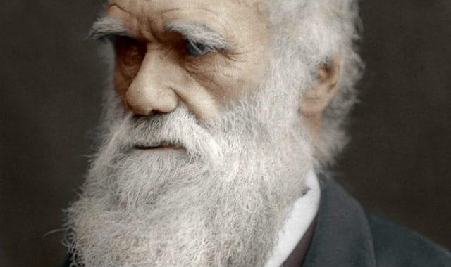 darwins beard