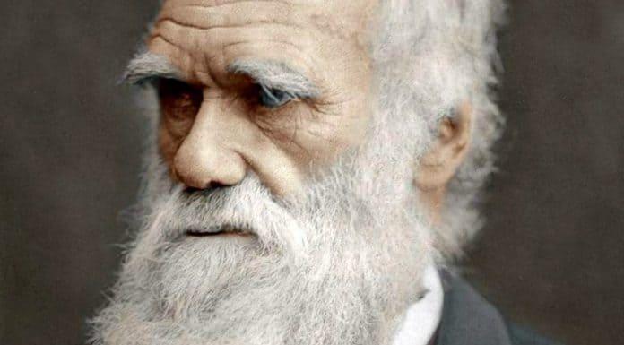 historical beards