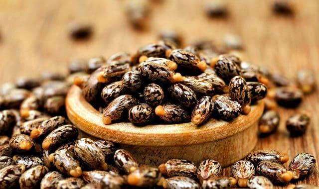 black jamaican castor oil seeds