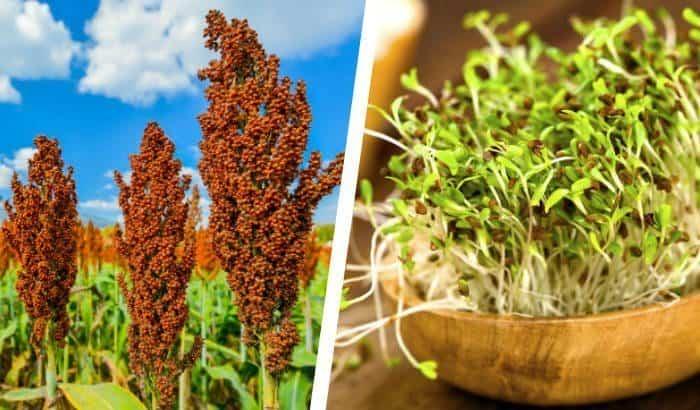 beard growth foods